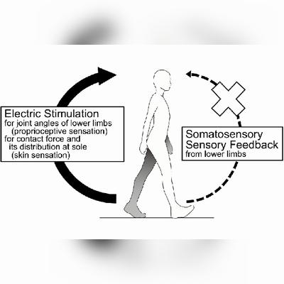 電気刺激による歩行感覚フィードバック 電気刺激を用いた擬似体性感覚フィードバックによる歩行感覚提